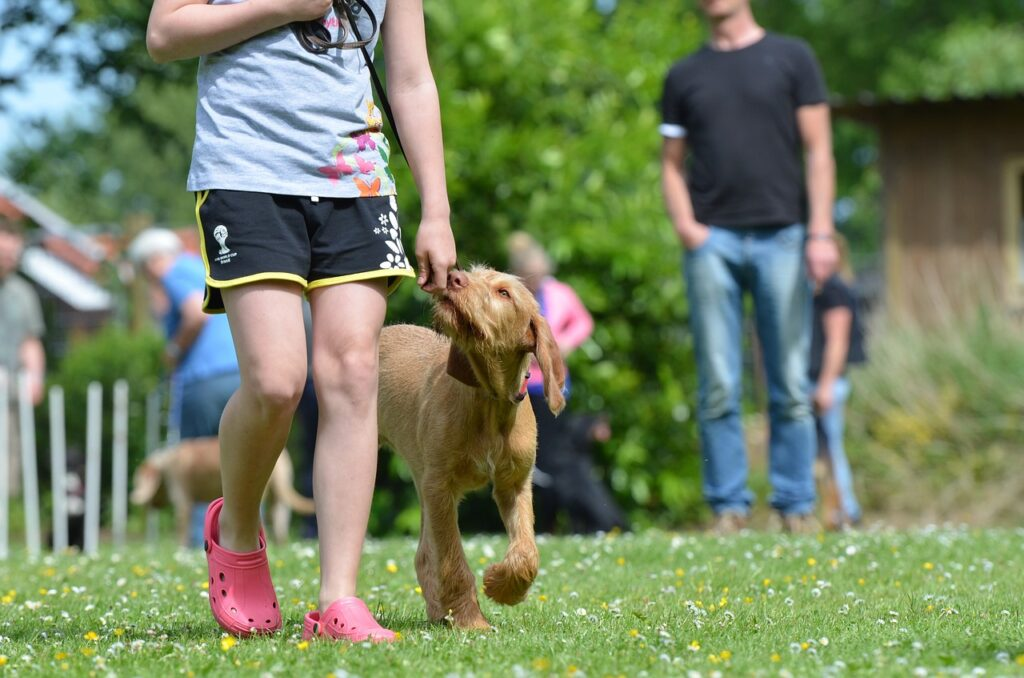 dog school, hunting dog, hungarian pointing dog